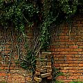 Another Brick In The Wall by Shannon Louder
