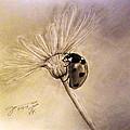 Another Ladybug by Jose A Gonzalez Jr