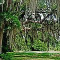 Savannah National Wildlife Refuge by Lydia Holly