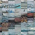 Antarctic Mosaic by Karla Weber