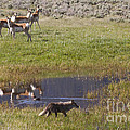 Antelope   Duck   And Coyote by J L Woody Wooden