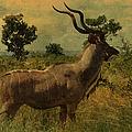 Antelope by Ericamaxine Price