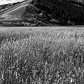 Antelope Flats by Frank Burhenn