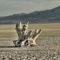 Antelope Island Stump by Ely Arsha