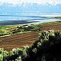 Antelope Island Wasatch Mountains Utah by Bob Pardue