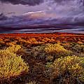 Antelope Valley by Ingrid Smith-Johnsen