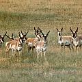 Antelope by Vaswaith Elengwin