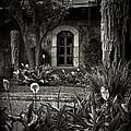 Antigua Garden by Tom Bell
