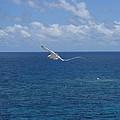 Antigua - In Flight by HEVi FineArt