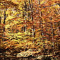 Antique Fall by Mariola Bitner