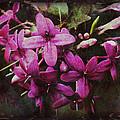 Antique Floral  by Debbie Nobile