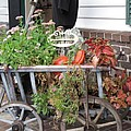 Antique Goat Cart by Barbara McDevitt