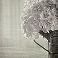 Antique Hydrangea by Kim Hojnacki