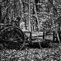 Antique Manure Spreader In The Forest by Jeff Sinon