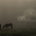 Antique Scene Of Horses In A Fog by Mick Anderson