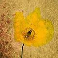Antique Yellow Flower by Brian Raggatt
