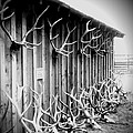 Antlers by Dan Sproul