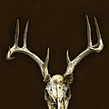 Antlers by Margie Hurwich