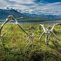 Antlers On The Hill by Andrew Matwijec