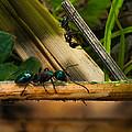 Ants Adventure 2 by Bob Orsillo