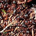 Ants by Jouko Lehto