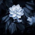 Moonlight Maiden by Jeanette C Landstrom