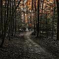 Appalachian Trail by Anthony Fields