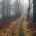 Appalachian Trail Fog by Glenn Gordon