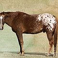 Appaloosa by Betty LaRue