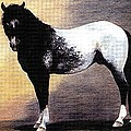 Appaloosa Horse Portrait by Olde Time  Mercantile