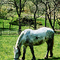 Appaloosa In Pasture by Susan Savad