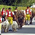 Appenzell Parade Of Cows by Ginger Wakem