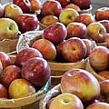 Apple Baskets by Dana Bucy Miller
