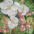 Apple Blossom Collage by Sharon Marcella Marston