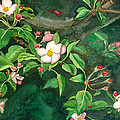 Apple Blossoms by Brad McLean