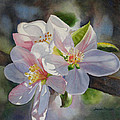 Apple Blossoms In Sunlight by Sharon Freeman