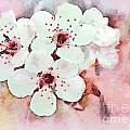 Apple Blossoms Pink - Digital Paint by Debbie Portwood