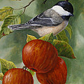 Apple Chickadee Greeting Card 2 by Crista Forest