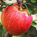 Apple On The Tree by Andee Design
