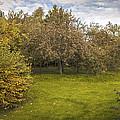 Apple Orchard by Amanda Elwell