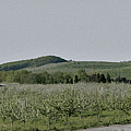 Apple Orchards In Pennsylvania by Bruce Woodruff