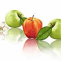 Apple Story by Veronica Minozzi