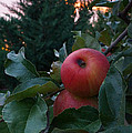 Apple Sunset by Mick Anderson