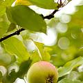 Apple Taste Of Summer 2 by Jenny Rainbow