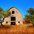 Apple Tree Barn by Dennis Early