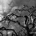Apple Tree Bw by Michael Arend