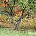 Apple Tree In Autumn by Michael P Gadomski