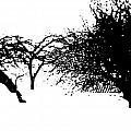 Apple Trees by William Tasker