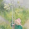 Appleblossom by Carl Larsson
