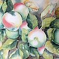 Apples by Inese Poga